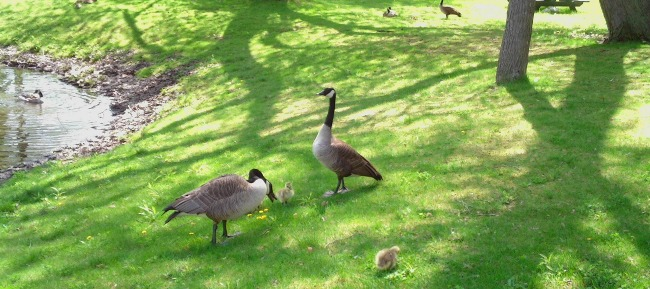 Local Wildlife Abounds!